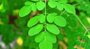 Kellogg Venture Capital Fund Invests in Moringa Manufacturer
