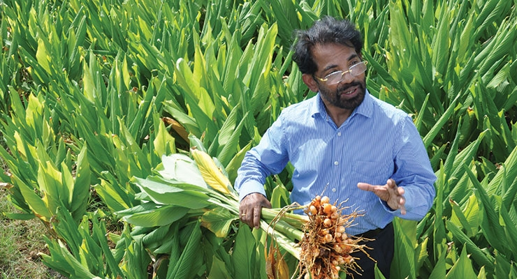 VG Nair, group CEO, Sami Labs Ltd., explains how turmeric grows.