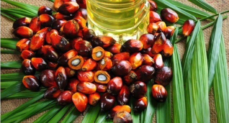 Evonik Expands Palm Oil Portfolio