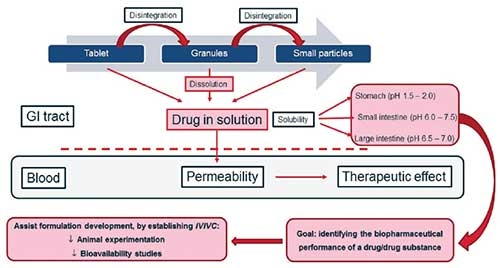 Figure 1. Oral route flowchart (adapted from Fotaki, et al, 2010, The open drug delivery journal)2