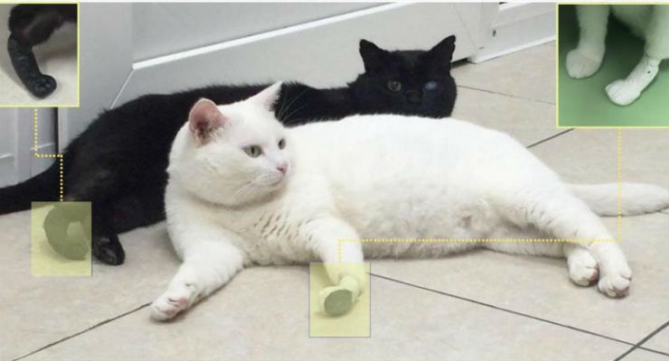 Thomas and Kutuzov, the cats with artificial feet