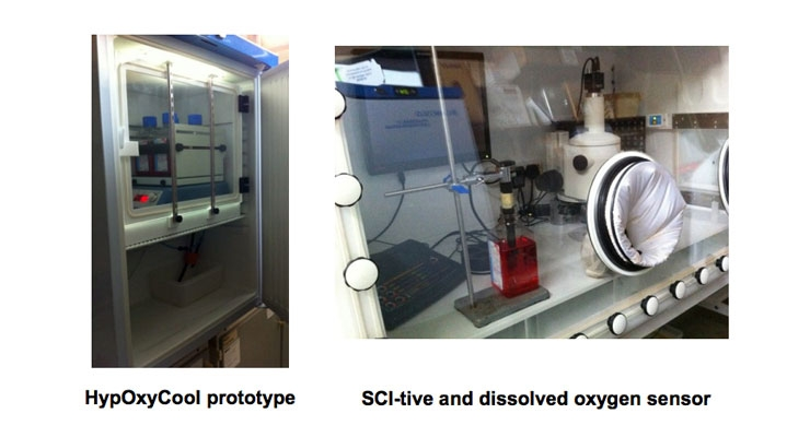 Rapid and effective modulation of dissolved oxygen levels in cell culture media for improved hypoxia