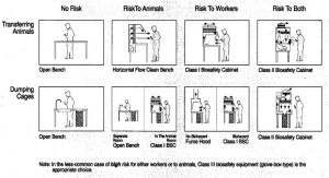 Risks to Assess When Selecting Clean Benches And Biosafety Cabinets For Animal Research