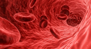 3D Printed Patch Guides Growing Blood Vessels