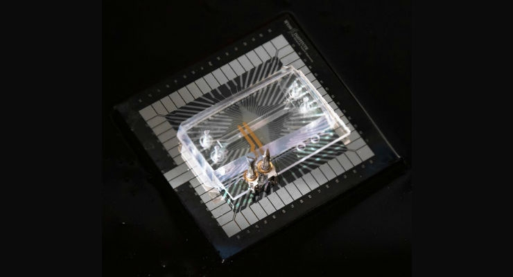 This photograph of the Transepithelial Electrical Resistance- Multi-Electrode Array (TEER-MEA) chip shows the TEER electrodes in gold, the MEA collectors made of platinum in gray, and the two transparent parallel running microfluidic channels on top of the MEA electrodes. All images courtesy of Wyss Institute at Harvard University.