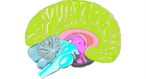 New Assay Detects Brain Cancer with Greater Sensitivity