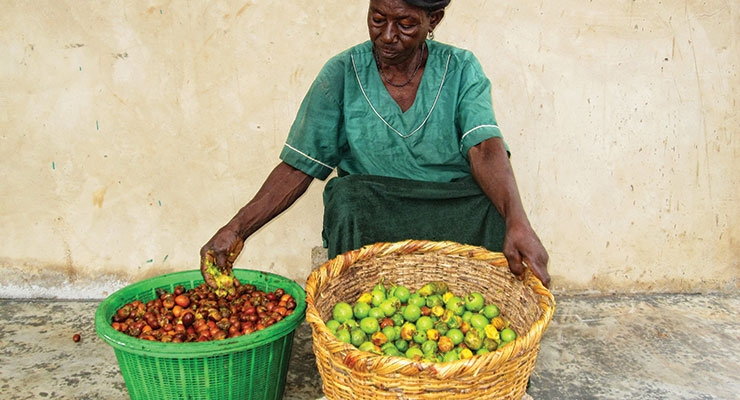 AAK Leads the Way in Sustainably-Sourced Shea