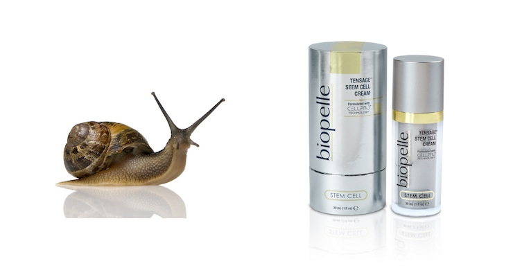 These Skin Care Brands Feature Snail Egg Extact & Collagen