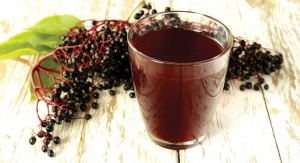 Black Elderberry: Providing A Year-Round Immune-Boost