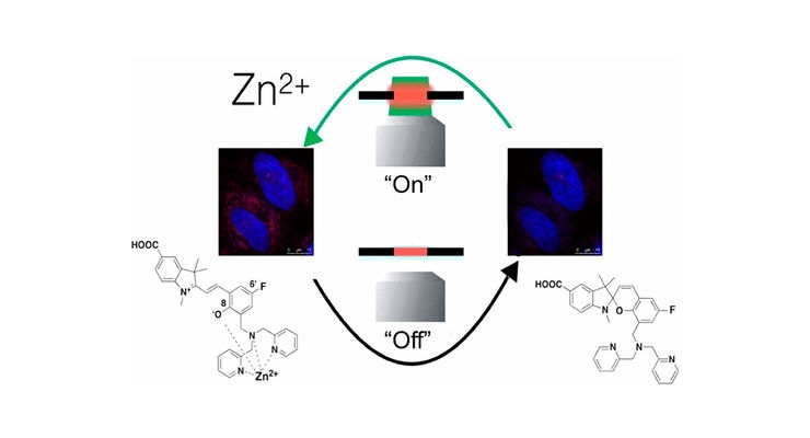 Biologically compatible fluorescent ion sensors, particularly those that are reversible, represent a key tool for answering a range of fundamental biological questions. Image courtesy of Heng et al., ACS Omega.