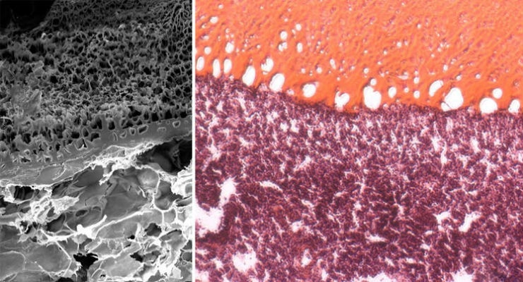 Super-Elastic Surgical Glue Sticks and Seals In Vivo