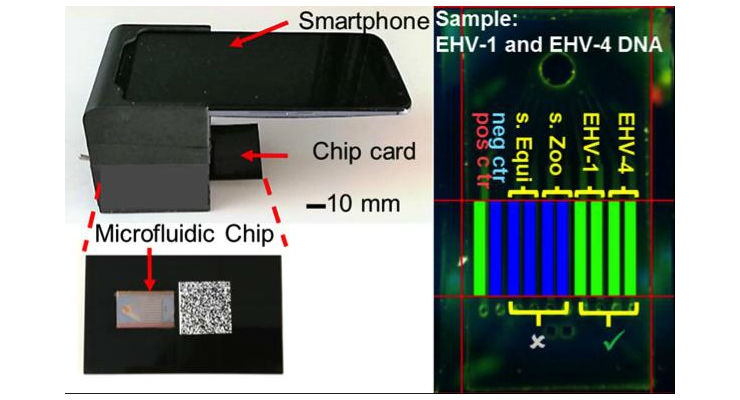 The system uses a commercial smartphone to acquire and interpret real-time images of an enzymatic amplification reaction that takes place in a silicon microfluidic chip that generates green fluorescence and displays a visual read-out of the test. The system is composed of an unmodified smartphone and a portable 3D-printed cradle that supports the optical and electrical components, and interfaces with the rear-facing camera of the smartphone. All images courtesy of Micro & Nanotechnology Laboratory, University of Illinois at Urbana-Champaign.