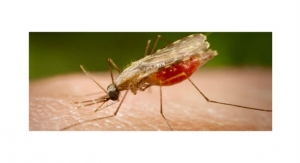 Global Good and Motic Introduce AI-Powered Microscope to Fight Drug-Resistant Malaria