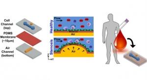 Organ-on-a-Chip Device Models Heart Disease