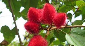 Annatto: Delivering Tocotrienols from Amazonia
