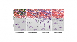 Tissue Engineering to Improve Meniscus Repair