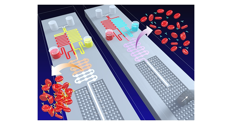 The illustration above depicts agglutinated blood (left) and un-agglutinated blood (right) moving through a chip. The agglutinated blood moves slower (shown in the center chamber) compared to the un-agglutinated blood. Image courtesy of Lab on a Chip.