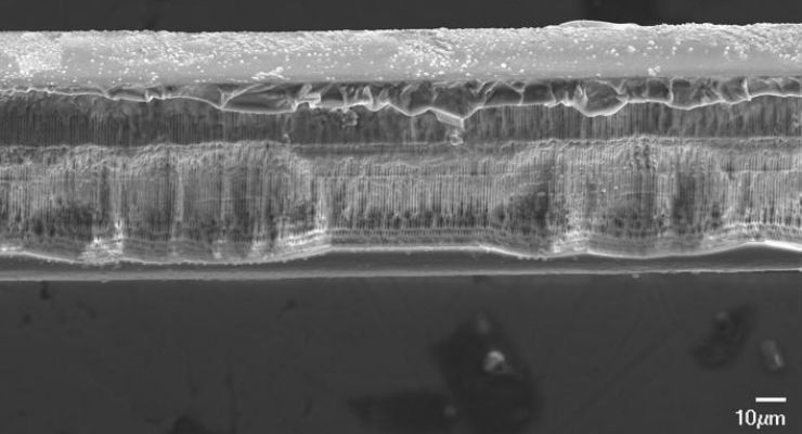 Researchers inscribed a sensing element known as fiber Bragg grating into a glass optical fiber designed to dissolve completely inside the body. The image shows the side view of a bioresorbable fiber Bragg grating after it has dissolved in liquid. The gratings could be used as tiny probes that can safely reach and assess delicate organs. Images courtesy of Maria Konstantaki, Foundation of Research and Technology - Hellas.