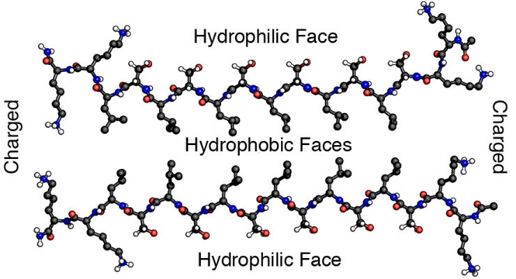 Hydrophobic dimers of self-assembling multidomain peptides, each with the amino acid sequence of K2(SL)6K2, form a hydrogel that turns out to have a host of therapeutic properties, according to Rice University scientists. Image courtesy of Hartgerink Research Group/Rice University.