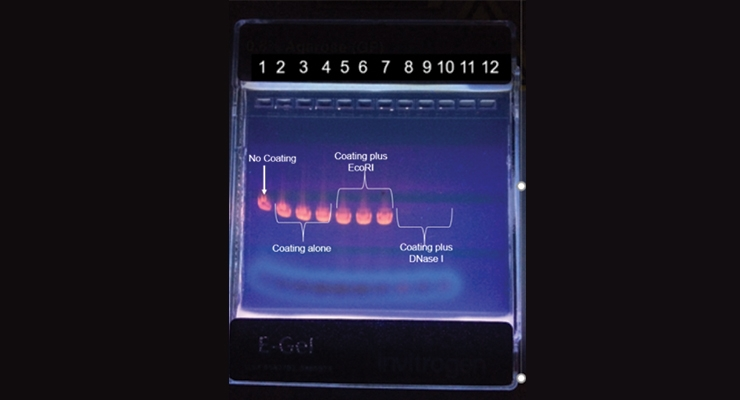 Figure 1. Minwax paint films having  DNase I degrade DNA.
