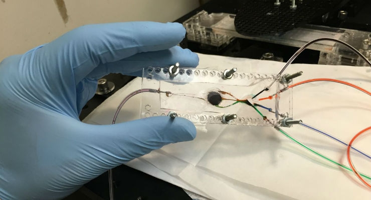Engineer Develops 3D Printer that Can Create Complex Biological Tissues