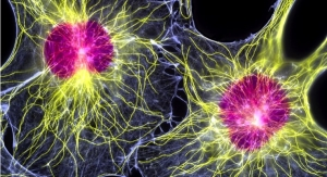 SpinalCyte Applies to FDA to Expand Human Clinical Trial of CybroCell Dermal Fibroblasts