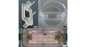 Novel Microplate 3D Bioprinting Platform Enables Muscle & Tendon Tissue Engineering
