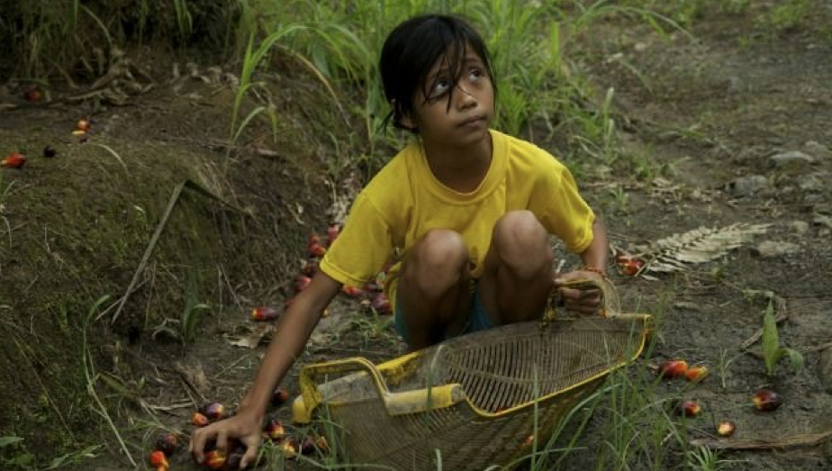 The US Dept of Labor lists palm oil coming from Indonesia and Malaysia as being produced with child labor. Photo: Jason Motlagh