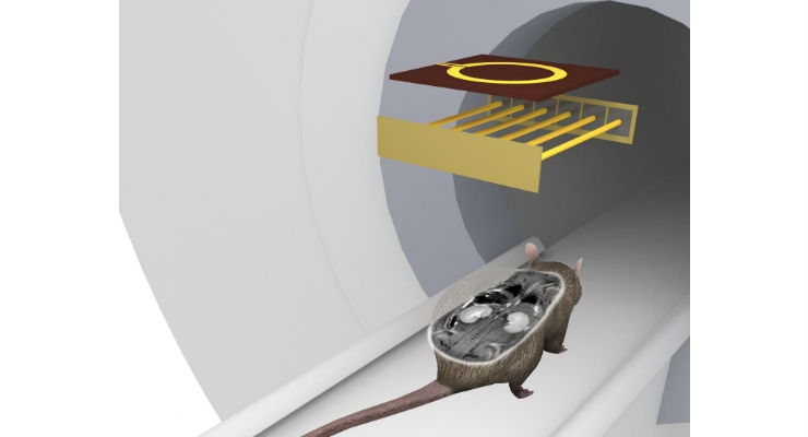 Russian Scientists Design New MRI Coil for Preclinical Studies