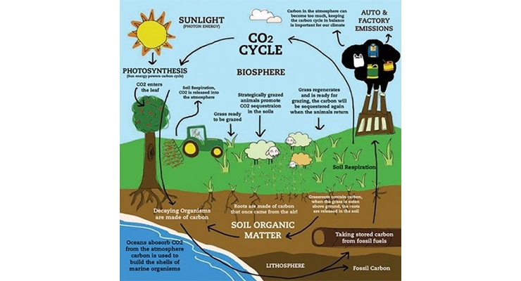 Figure 5.  The carbon dioxide cycle.