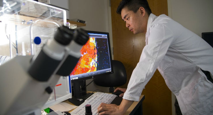 First author Woojin Han observes muscle tissue samples treated with the new MuSC nanohydrogel. Image courtesy of Georgia Tech/Christopher Moore.