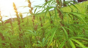 Industry Advocates Support Farm Bill Provision to Legalize U.S. Hemp Farming