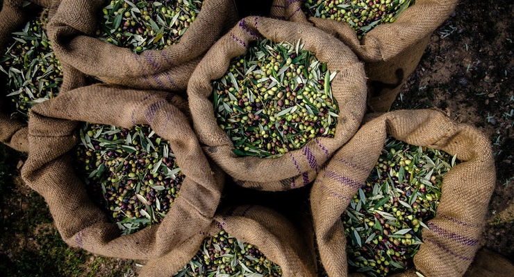 DolCas Biotech to Launch Organic Olive Tree Ingredient in U.S.