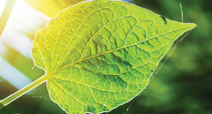 Improving photosynthesis