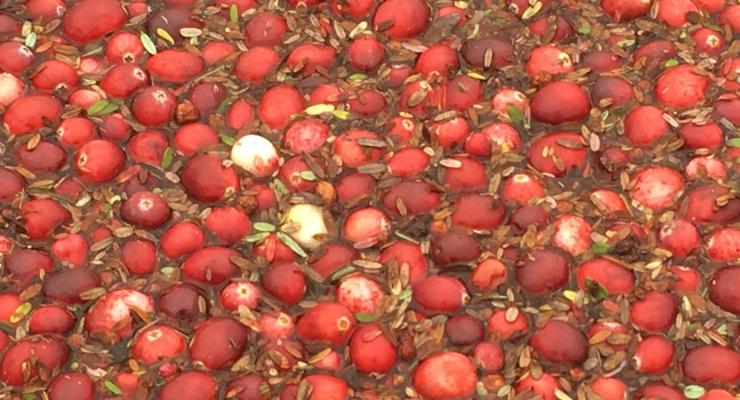 Fruit d'Or Hosts Cranberry Harvest Symposium
