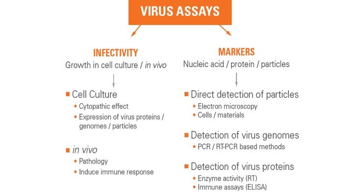 Viral Contaminant Testing in Biopharma Manufacturing