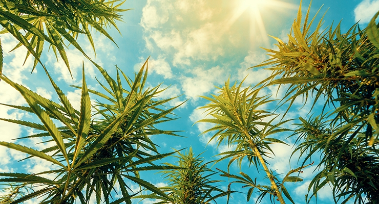 AHPA Revises Hemp-CBD Status Report