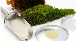 Seaweed Extract's Anti-Cancer Pathways Revealed through In Vitro Study