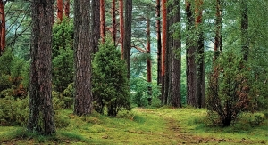 BillerudKorsnäs Scores an A for Protecting Forests