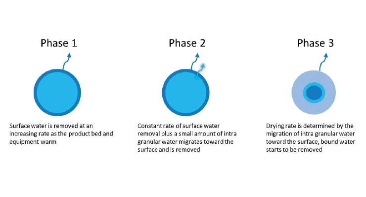 Figure 3: Fluid bed drying phases (Courtesy AbbVie)