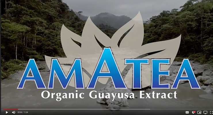 What is Guayusa?