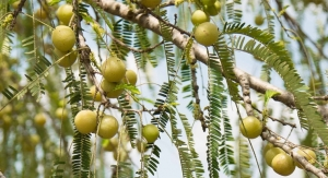 Indian Gooseberry Boosts Heart Health