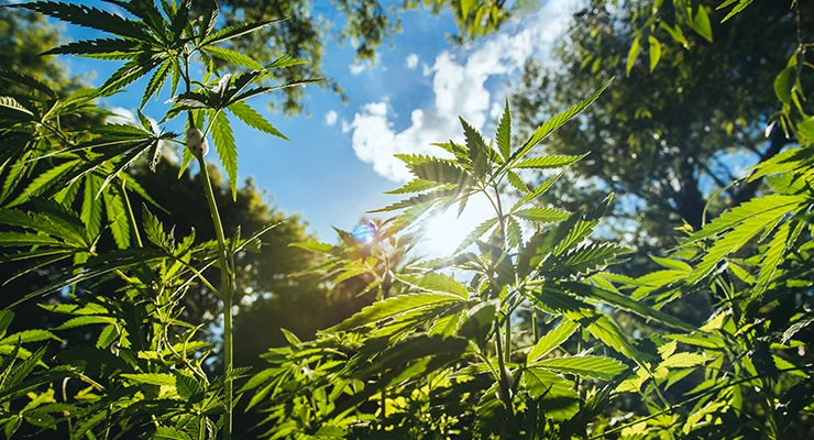 AHPA Adopts Guidance Policy on Hemp & Hemp-Derived CBD Products