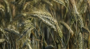 Whole Grains Can Change Intestinal Serotonin Production: Mouse Study