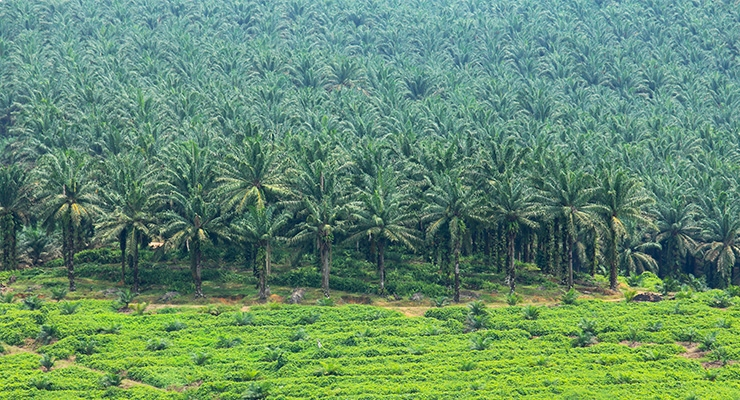 Partners Unite for Indonesian Sustainable Palm Project