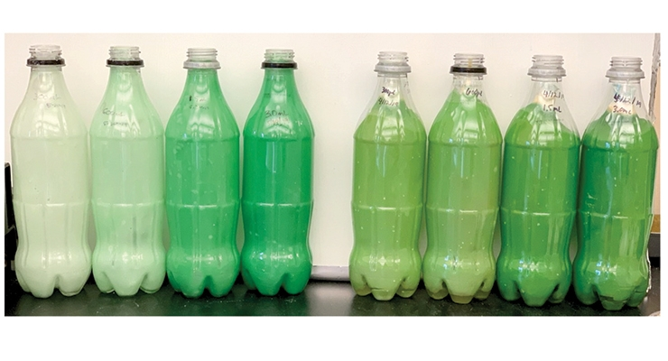 Figure 12.  Freshly made samples at 0.5, 1, 2.5, and 5% algae loading levels (left to right) versus the same loading levels after 45 days of storage at room temperature under ambient lights.