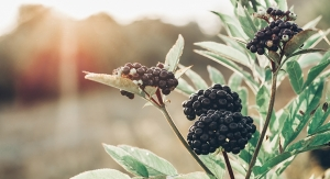 INS Farms Launches Elder Pure Elderberry