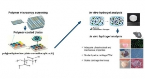 New Hydrogel Could Help Regenerate Cartilage