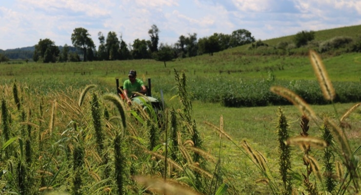 Research Partnership Designed to Pioneer Regenerative Hemp Agriculture in North America