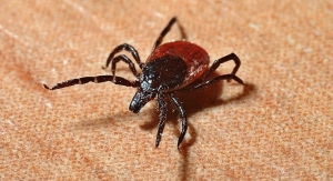 FDA OKs Streamlined Test Method for Lyme Disease